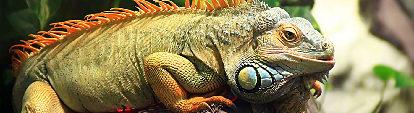 Reptiles Available